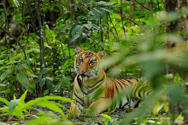 India incanto tour operator viaggi in india viaggi - Porta pranzo tiger ...